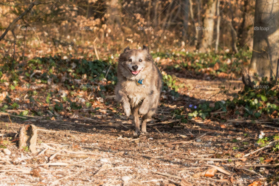 Dog running through the forest