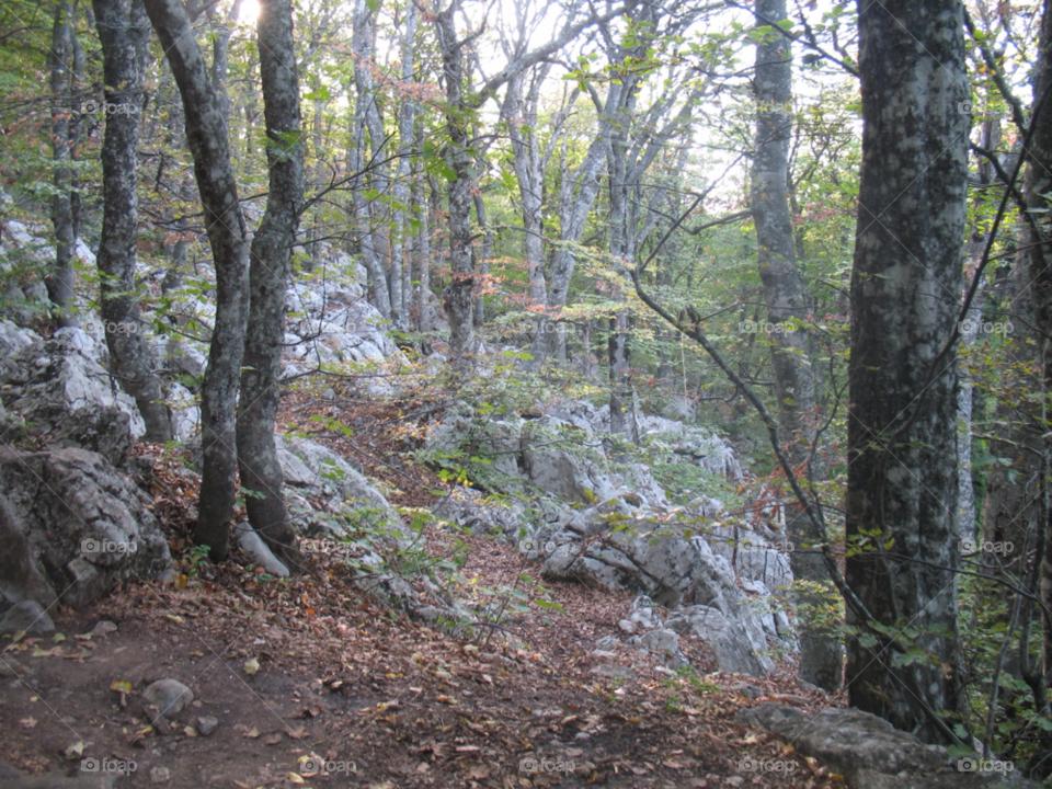 trees forest autumn crimea by juulli_ya