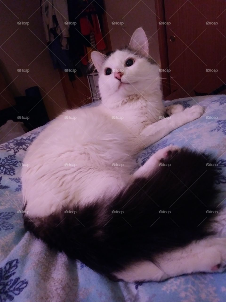 A handsome white cat named Cloud relaxing on a bed