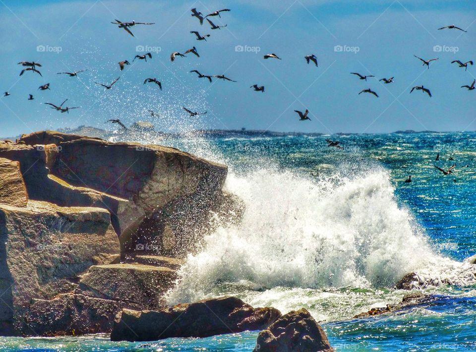 Pelicans Wheeling Through The Ocean Sky. Seabirds At The California Shoreline