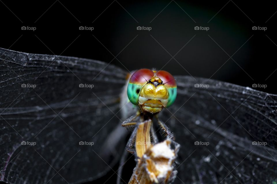 the beautiful face of the dragonfly