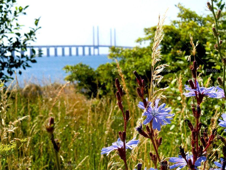 Summer on both sides of the bridge