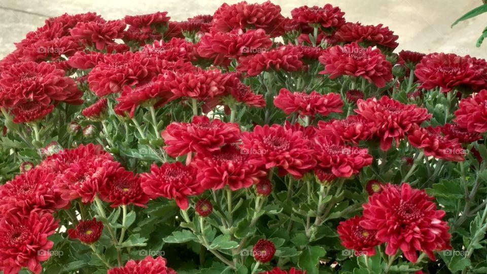 Flower, Garden, Flora, Nature, Floral