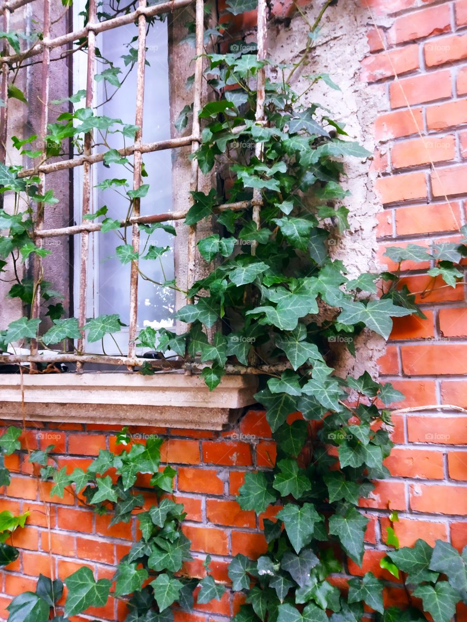 Ivy and Window 2