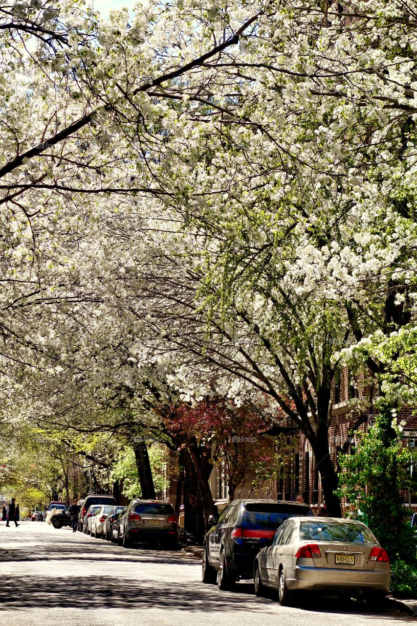 Spring Time in Greenwich Village. Spring Time in Greenwich Village, New York City