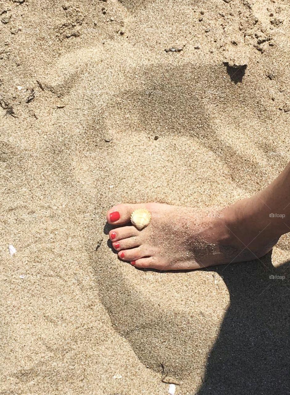 Summer, seashell and golden sand