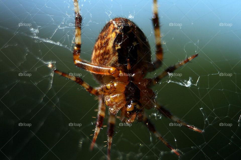 macro makro spider spinne by dryair