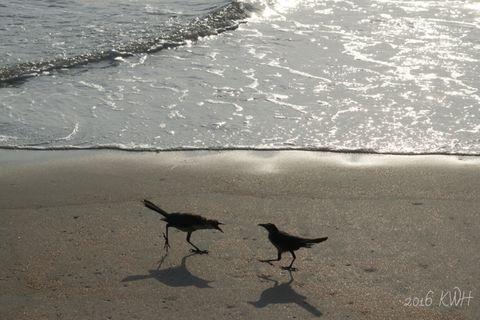 Ocean Beach Morning Bird Talk