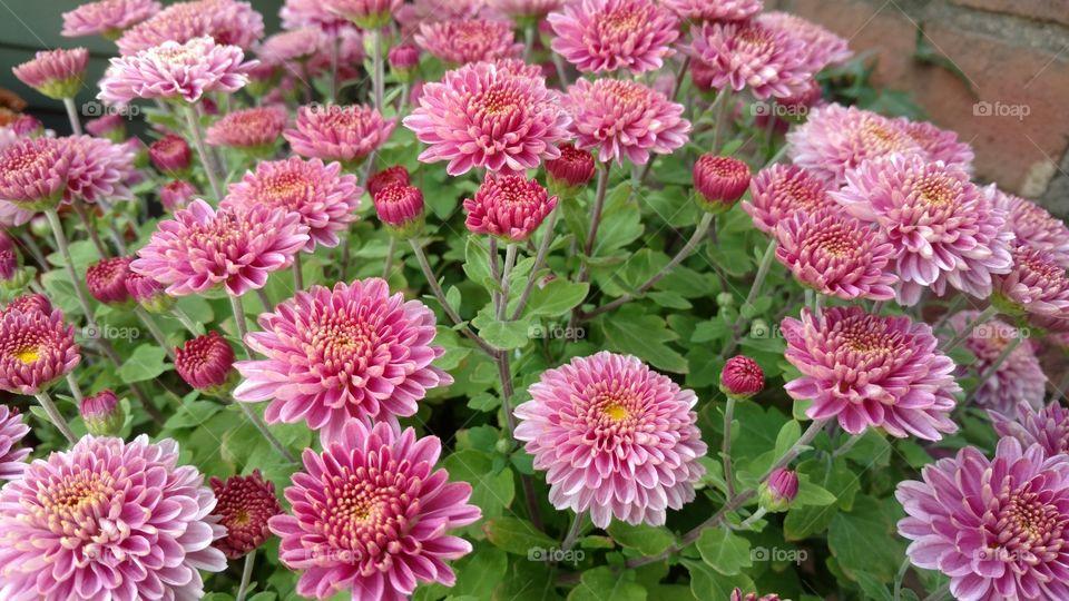 Flower, Flora, Nature, Garden, Floral