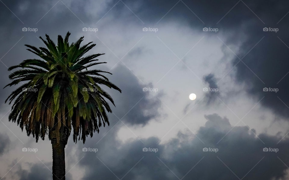 Palm and the Moon