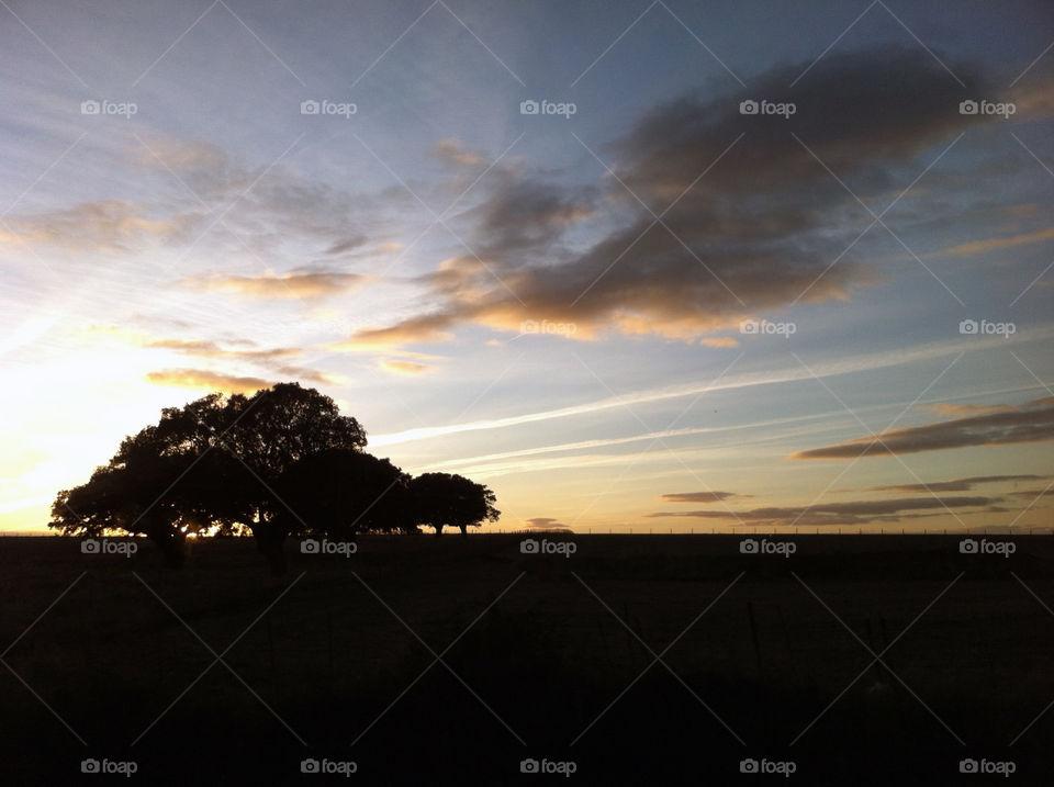 Backlight tree silhouette | sunset, dawn, landscape, evening