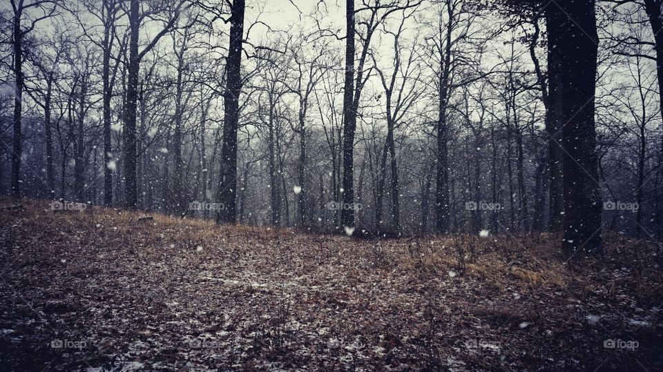 Scenic view of bare trees with blizzard