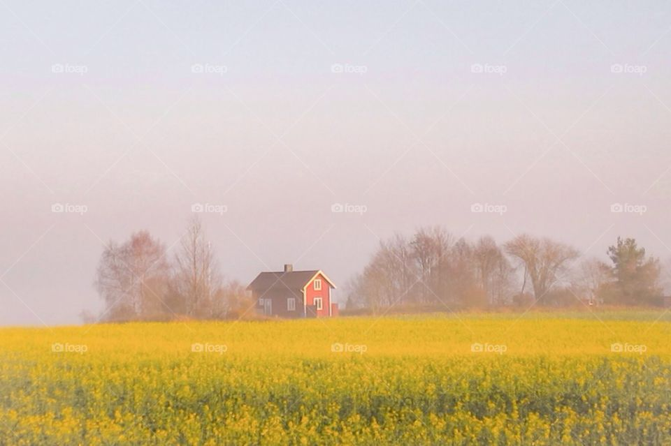 A foggy day | agriculture, nature, outdoors, farmland
