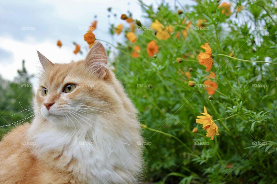 My cat summer