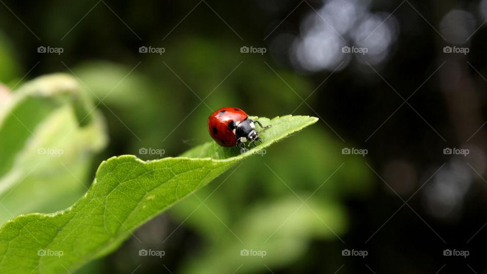 spotted a ladybug