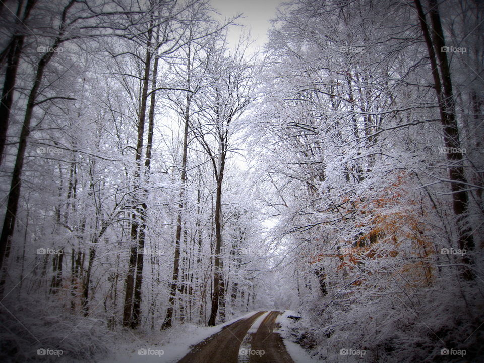 This is a gravel dirt road on a very cold snowy white winter day with all the trees covered in snow.