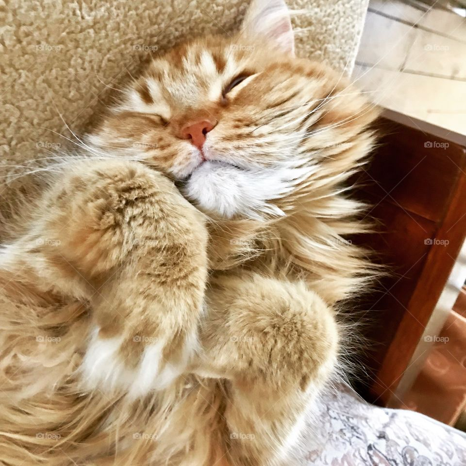 Leo our lion cat sleeping