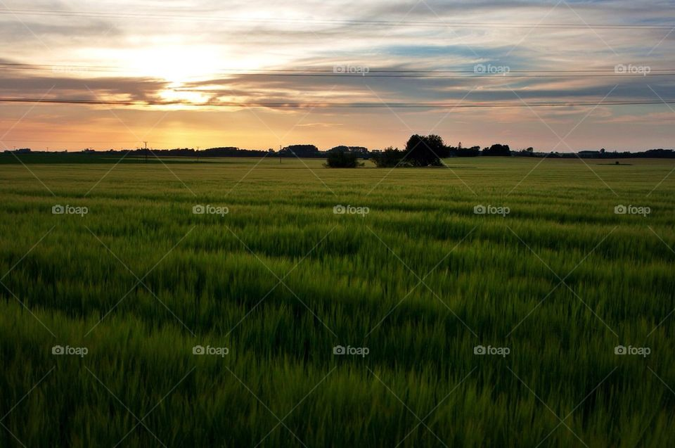 Sunset view of landscape