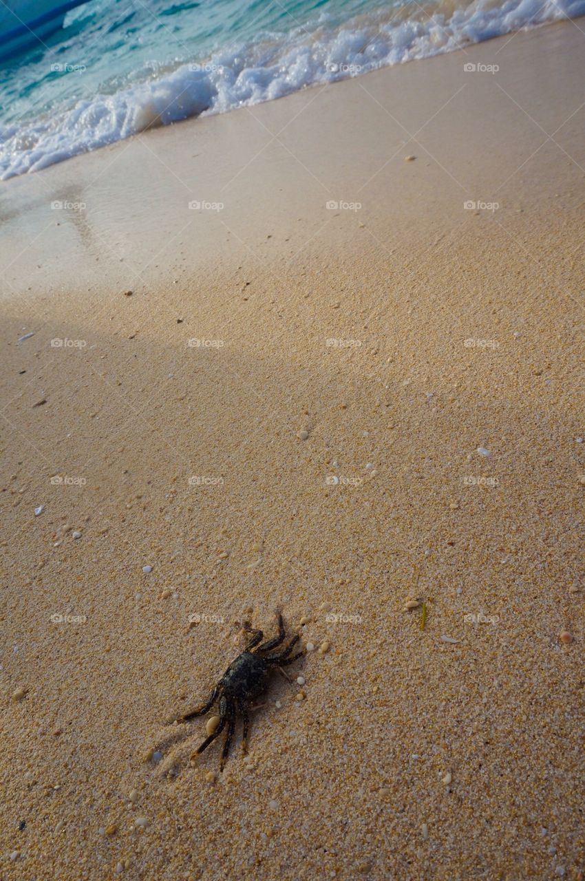 Crab by the beach