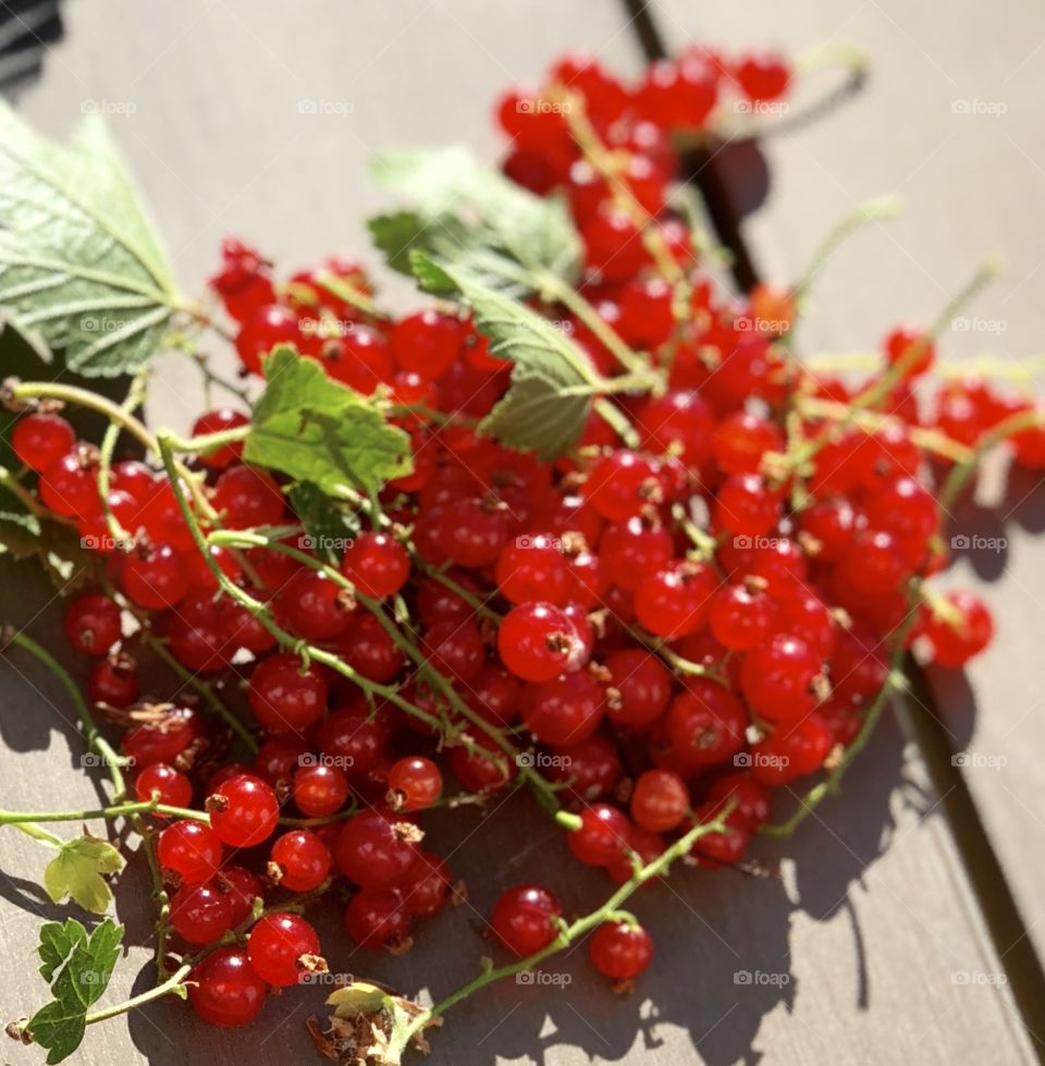 wild red currants