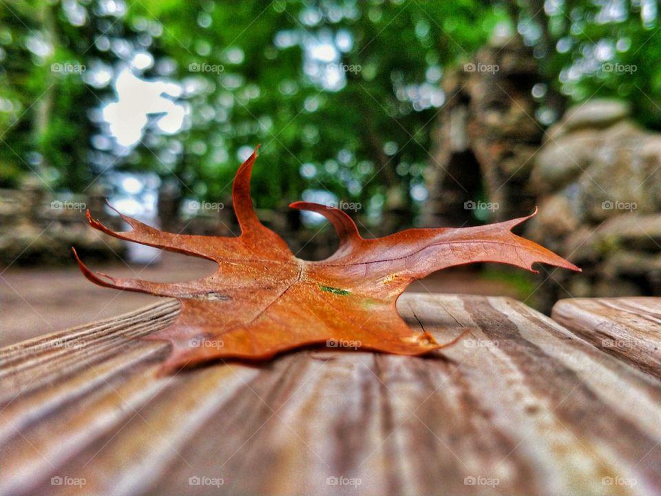 Start of Fall Foliage !!!