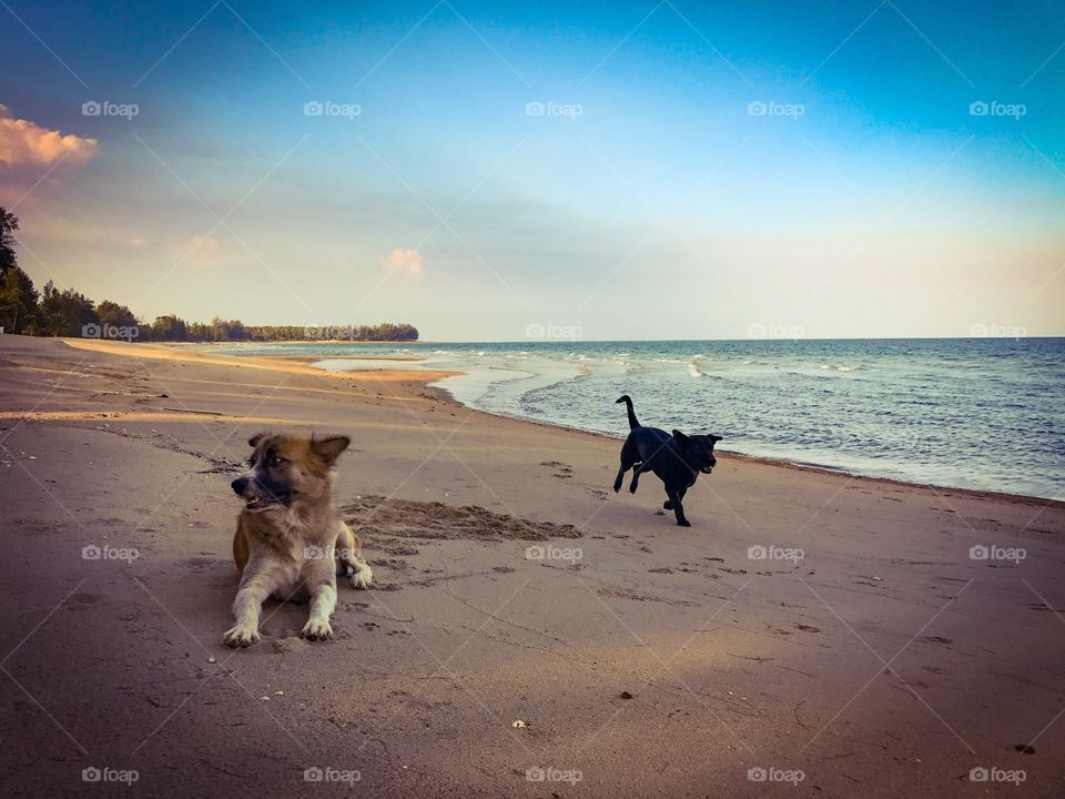 Two friendly dogs on tropical sandy beach in Thailand