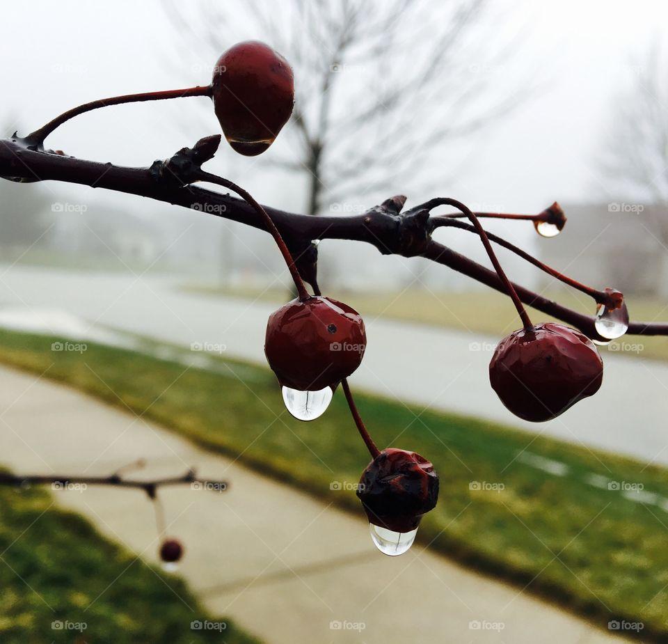 Close-up of wet cherries